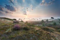 在沙丘的有薄雾的日出与开花的石南花 库存照片