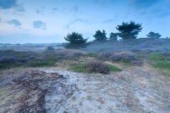 在沙丘的有薄雾的黄昏与石南花 库存照片