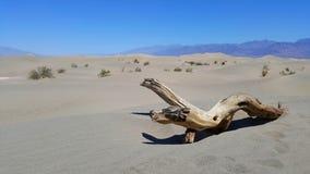 在沙丘的木材在死亡谷点心 库存照片
