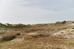在沙丘的植被 库存图片