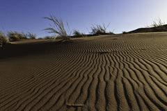 在沙丘的模式 库存照片