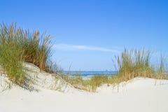 在沙丘的海滩草 免版税库存图片