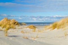 在沙丘的海滩草 图库摄影