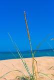 在沙丘的特写镜头草靠岸,蓝色海洋和天空在backg 免版税库存图片