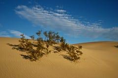 在沙丘的生活 库存图片
