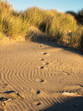 在沙丘的皮影戏 库存照片