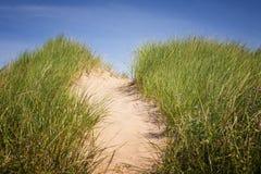在沙丘的道路与草 免版税库存照片