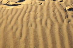 在沙丘的金龟子脚印在Wahiba沙子 免版税图库摄影