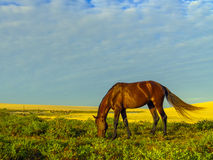 在沙丘的马 库存照片