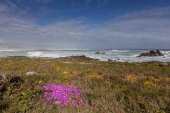 在沙丘的紫色花 库存图片