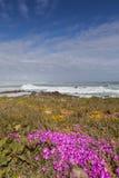 在沙丘的紫色花 免版税图库摄影