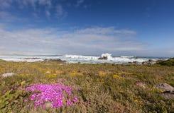 在沙丘的紫色花 库存照片