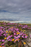 在沙丘的紫色花 图库摄影