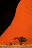 在沙丘45, Sossusvlei,纳米比亚的大羚羊羚羊属 免版税库存照片