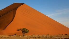 在沙丘45, Sossusvlei,纳米比亚的大羚羊羚羊属 免版税库存图片
