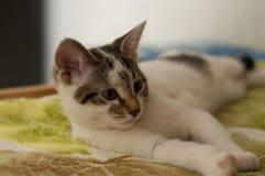 在沙发的小猫猫 免版税库存图片
