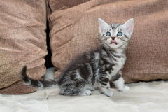 在沙发的小猫 免版税库存照片