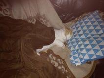 在沙发的猫睡眠 免版税库存图片