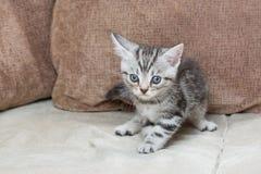 在沙发-储蓄图象的小猫 库存图片