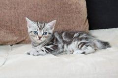 在沙发-储蓄图象的小猫 免版税库存图片