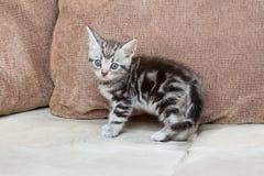 在沙发-储蓄图象的小猫 免版税图库摄影