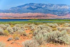 在沙子凹陷国家公园离开植被在犹他 免版税库存照片