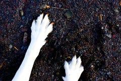 在沙子和小卵石的狗爪子 库存图片