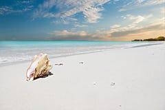 在沙子和日落天空的巧克力精炼机壳 免版税库存图片