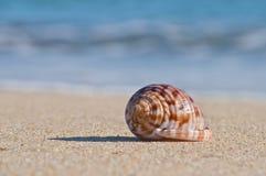 在沙子和被弄脏的水的壳 免版税库存照片