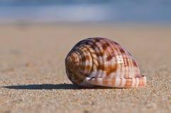 在沙子和被弄脏的水的特写镜头贝壳 免版税库存照片