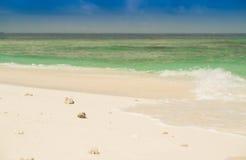 在沙子和绿松石海洋的小的白色壳 免版税图库摄影