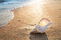 在沙子在海滩,背景的大seashel, 图库摄影