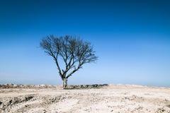 在沙子地面,蓝天的干燥树 免版税库存照片
