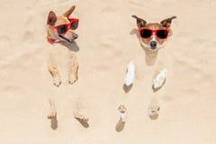 在沙子埋没的狗夫妇  库存图片