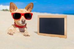 在沙子埋没的狗 库存图片