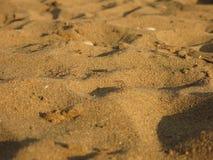 在沙子小山的焦点  免版税库存图片