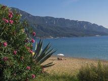 在沙子海滩和海的看法贴水的科孚岛海岛的,有美丽的开花的桃红色夹竹桃夹竹桃的希腊乔治斯Pagon 库存图片