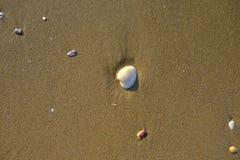 在沙子海滩的壳 免版税库存图片