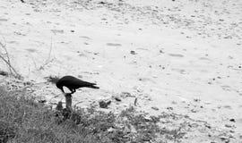 在沙子海滩的掠夺 库存图片