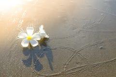 在沙子海滩的花 图库摄影