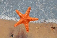 在沙子海滩和热带土耳其玉色se的美丽的海星 免版税图库摄影