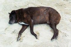 在沙子海滩的懒惰狗睡眠 免版税库存照片