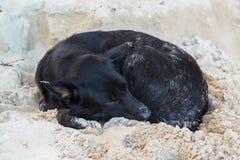 在沙子海滩的懒惰狗睡眠 库存图片