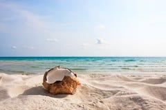 在沙子海滩的新鲜的椰子 免版税库存图片