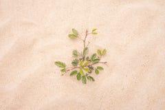 在沙子海滩的树绿色叶子 免版税库存照片