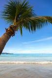 在沙子海滩的棕榈树 免版税库存照片