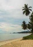 在沙子海滩的椰子树在多云天,苏梅岛,泰国 库存图片