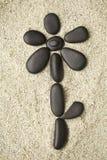 在沙子海滩的花 库存图片