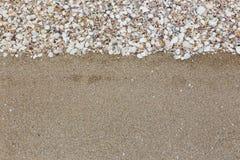 在沙子海滩的贝壳 库存照片