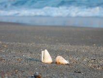 在沙子海滩的贝壳 免版税库存图片